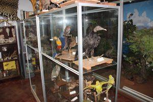 Museo Nacional de Historia Natural del Paraguay (MNHN)